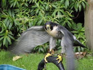 schottland_07-17-09-2010-245