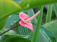 Costa_Rica_00003