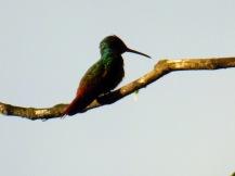 Costa_Rica_00014