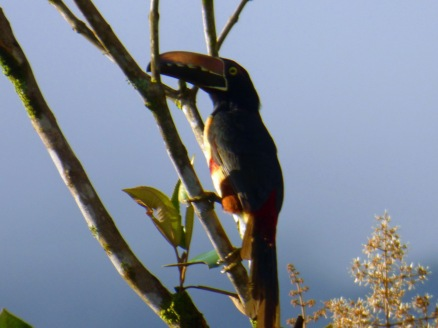 Costa_Rica_00015
