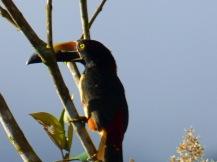Costa_Rica_00018