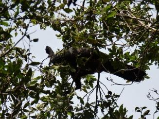 Costa_Rica_00033