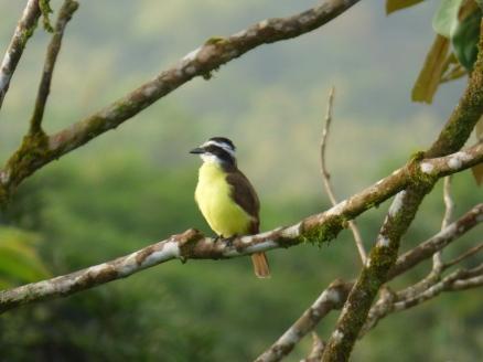 Costa_Rica_00041
