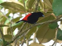 Costa_Rica_00045