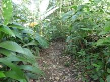Costa_Rica_00048