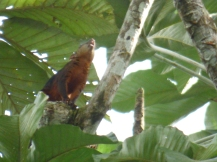 Costa_Rica_00051