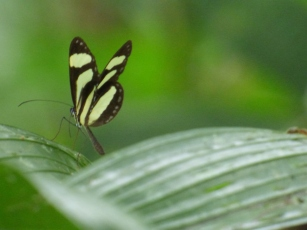 Costa_Rica_00054