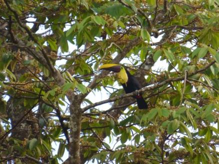 Costa_Rica_00062