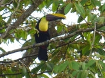 Costa_Rica_00063