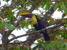 Costa_Rica_00065