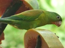 Costa_Rica_00073