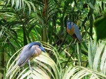 Costa_Rica_00108