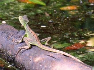 Costa_Rica_00118