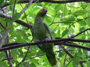 Costa_Rica_00123
