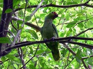 Costa_Rica_00124