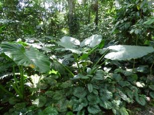 Costa_Rica_00128