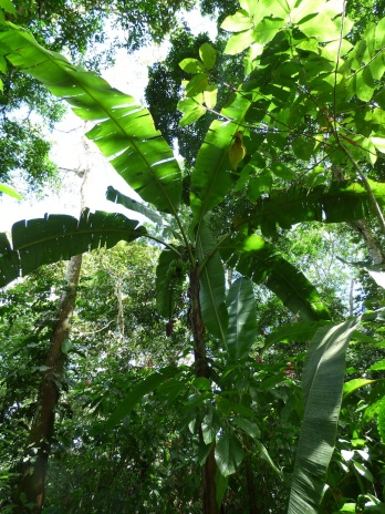 Costa_Rica_00131