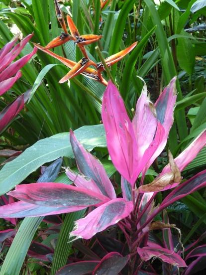 Costa_Rica_00134