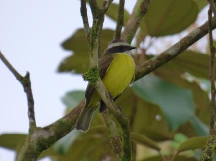 Costa_Rica_00144