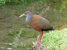Costa_Rica_00150