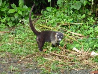 Costa_Rica_00171