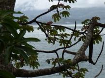 Costa_Rica_00181