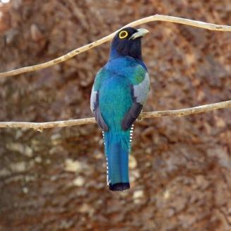 Costa_Rica_00256