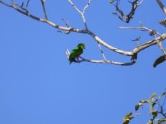 Costa_Rica_00275