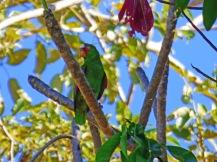 Costa_Rica_00277