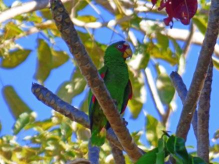 Costa_Rica_00278