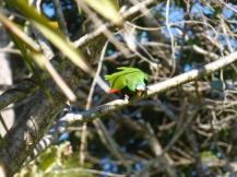 Costa_Rica_00293