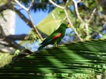 Costa_Rica_00294