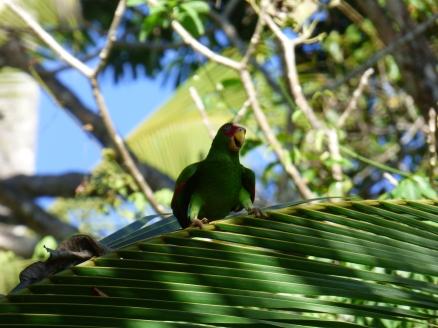 Costa_Rica_00295