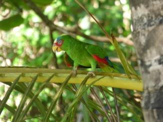Costa_Rica_00297