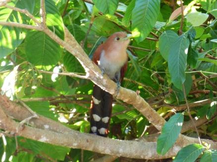 Costa_Rica_00330