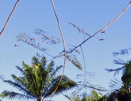 Costa_Rica_00337