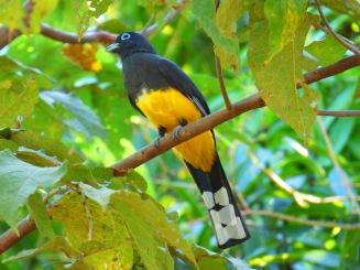 Costa_Rica_00343