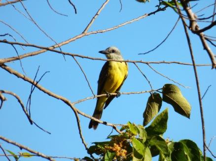 Costa_Rica_00344