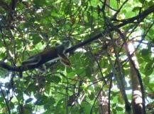 Costa_Rica_00400
