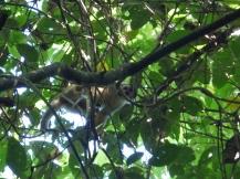 Costa_Rica_00402