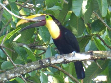 Costa_Rica_00416
