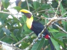 Costa_Rica_00420