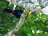 Costa_Rica_00430