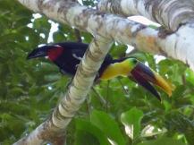 Costa_Rica_00431