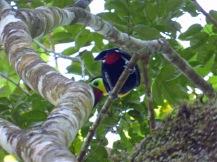 Costa_Rica_00432