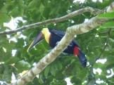 Costa_Rica_00433