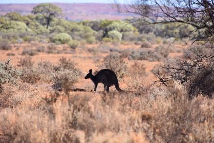 Australien_Blog_00058