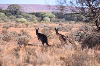 Australien_Blog_00060