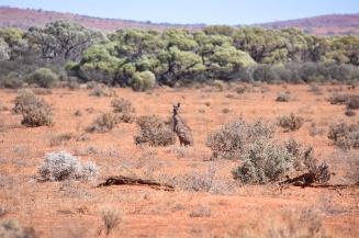 Australien_Blog_00061
