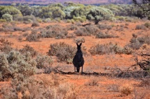 Australien_Blog_00062